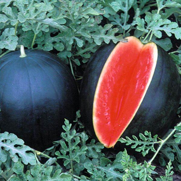 các loại trái cây