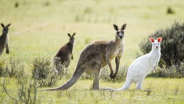 có thể bạn chưa biết về nước Úc