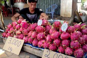 Lý do Trung Quốc ngừng thu mua thanh long từ Việt Nam